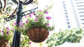 Planta de suspensão roxa genérica em um parque Foto de Stock