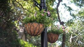 Planta de suspensão roxa genérica em um parque Foto de Stock Royalty Free
