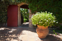 Planta de tiesto al lado de la puerta Imagen de archivo