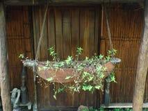 Planta de tiesto de Mokoro Fotos de archivo libres de regalías
