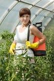 Planta de tomate de la mujer que pinta (con vaporizador) Foto de archivo libre de regalías