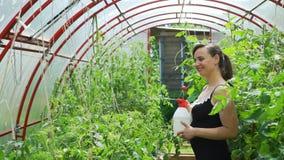 Planta de tomate de rociadura de la mujer con el espray del jardín almacen de video