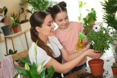 Planta de transplanta??o da m?e e da filha imagem de stock royalty free