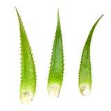 Planta de Vera del áloe aislada en el fondo blanco Fotos de archivo