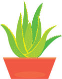 Planta de vera del áloe Foto de archivo