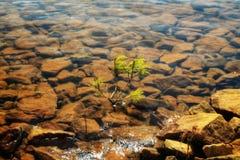 Planta debajo del agua fotografía de archivo