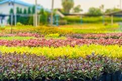 Planta decorativa Fotografia de Stock