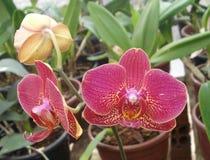 Planta decorativa Imagem de Stock Royalty Free