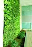 Planta decorativa bonita da trepadeira em uma parede foto de stock
