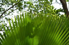 Planta decorativa da folha longa do jardim foto de stock royalty free