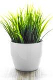 Planta decorativa de los wheatgrass en la maceta blanca Imagen de archivo