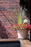 Planta decorativa em uma prateleira foto de stock