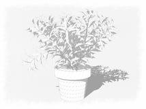 Planta decorativa en crisol ilustración del vector
