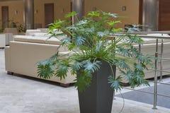 Planta decorativa interior Imágenes de archivo libres de regalías