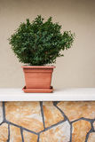 Planta decorativa na parede Fotos de Stock Royalty Free