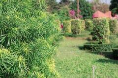 Planta decorativa no jardim Imagem de Stock Royalty Free