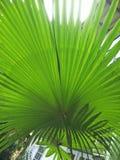 Planta decorativa no jardim imagem de stock