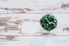 Planta del agavo en pote en la tabla de madera del vintage Foto de archivo