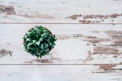Planta del agavo en pote en la tabla de madera del vintage Imagenes de archivo