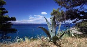 Planta del agavo por el mar Foto de archivo
