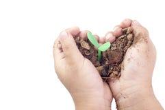 Planta del almácigo en las manos de un pequeño niño con blanco aislado Foto de archivo libre de regalías