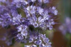 Planta del amigo de la abeja Foto de archivo libre de regalías