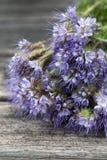 Planta del amigo de la abeja Imagenes de archivo
