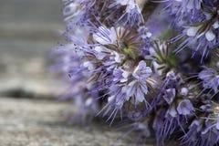 Planta del amigo de la abeja Imagen de archivo libre de regalías