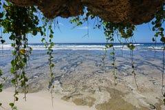 Planta del arrastramiento que cuelga abajo de horizonte de mar de la roca Fotos de archivo