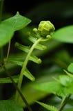 Planta del bebé Imagen de archivo