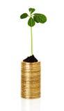 Planta del brote que brota de monedas fotografía de archivo libre de regalías