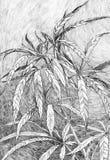 Planta del cáñamo stock de ilustración
