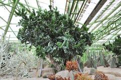 Planta del cactus Foto de archivo