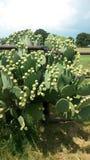 Planta del cactus fotos de archivo