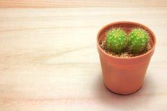Planta del cactus en la tabla de madera Imagen de archivo