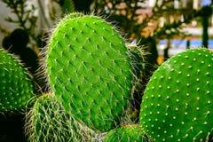 Planta del cactus en suelo arenoso Imagen de archivo libre de regalías