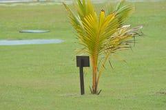 Planta del coco Foto de archivo libre de regalías