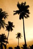Planta del coco Fotos de archivo