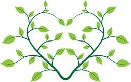 Planta del corazón ilustración del vector