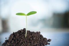 Planta del crecimiento Imagen de archivo libre de regalías