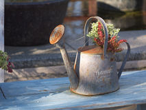 Planta del crisol y del follaje Imagenes de archivo
