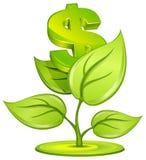 Planta del dólar Imágenes de archivo libres de regalías