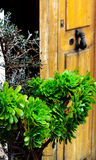 Planta del decoro del Aeonium (suculenta) Fotos de archivo libres de regalías