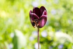 Planta del flor, fondo floral, cultivando un huerto Imagen de archivo libre de regalías