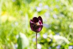 Planta del flor, fondo floral, cultivando un huerto Fotos de archivo