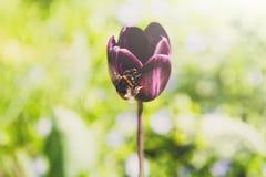 Planta del flor, fondo floral, cultivando un huerto Fotos de archivo libres de regalías