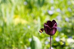 Planta del flor, fondo floral, cultivando un huerto Fotografía de archivo