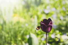 Planta del flor, fondo floral, cultivando un huerto Foto de archivo
