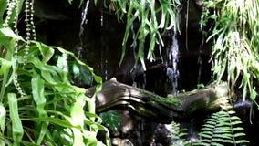 Planta del helecho, cascada y pequeño tronco en jardín metrajes