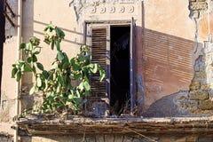 Planta del higo chumbo Fotos de archivo libres de regalías